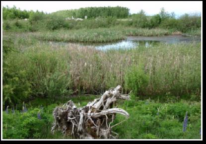 Sechelt Mine Wetland