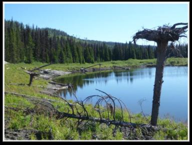 overwintering-pond-2015